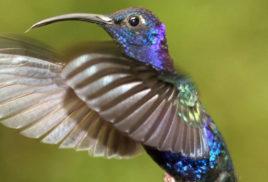 Birds find sanctuary in old-growth neighborhoods