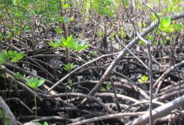 Coastal forest conservation in Kenya adds up