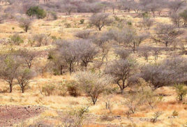 Case studies show financial, food security benefits of forest landscape restoration