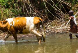 Mobile livestock initiative in Kenya improves grazing lands and farmer livelihoods