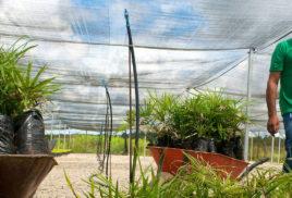 Momentum for U.N. decade of ecological restoration grows ahead of Nairobi GLF