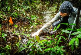 Our planet's peatlands: On the agenda at last?
