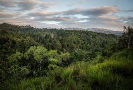 Forests could be the most realistic defense against global warming