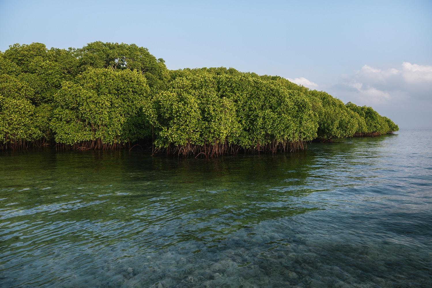 Kontribusi Mangrove Pada Mitigasi Perubahan Iklim di Indonesia